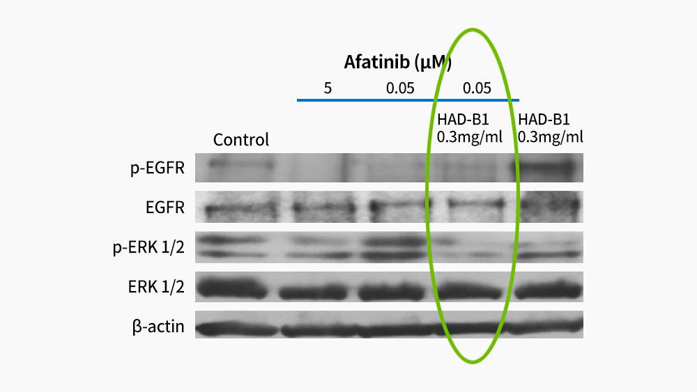 항암단과 Afatinib 병용 폐암 치료 도표